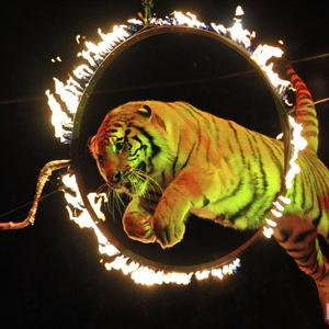 Цирки Приволжья