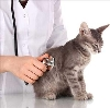 Ветеринарные клиники в Приволжье